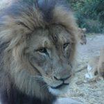 Powersoft DEVA, advanced messaging, Cincinnati Zoo