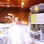 legal cannabis industry, Cannabis Pro AV